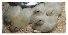 Beach Towel featuring the photograph Cute And Fuzzy Chicks by Chalet Roome-Rigdon