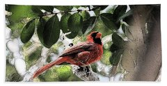 Beach Towel featuring the photograph Daddy Cardinal by Donna G Smith