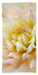 Dahlia Flower 03 Beach Towel