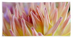 Dahlia Flower 05 Beach Towel