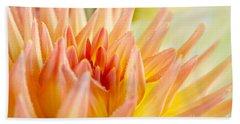 Dahlia Flower 06 Beach Towel
