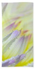 Dahlia Flower 07 Beach Towel