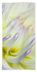 Dahlia Flower 09 Beach Towel
