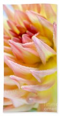 Dahlia Flower 13 Beach Towel