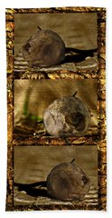 Beach Towel featuring the photograph Dead Rosebud Triptych by Steve Purnell