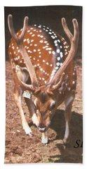 Deer Beach Sheet