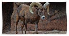 Desert Bighorn Sheep Ram I Beach Sheet