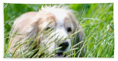 Dog In The Green Grass Beach Towel