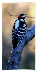 Beach Towel featuring the photograph Downy Woodpecker by Elizabeth Winter