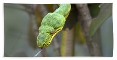 Emerald Tree Boa In Tree Costa Rica Beach Towel by Tim Fitzharris