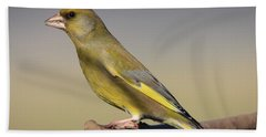 European Greenfinch Beach Towel