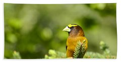 Evening Grosbeak Beach Sheet