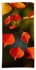 Beach Sheet featuring the photograph Fall Color 2 by Dan Wells