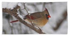 Female Northern Cardinal 4230 Pan Beach Sheet by Michael Peychich