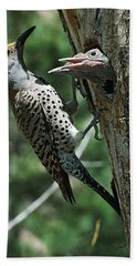 Female Northern Flicker Colaptes Beach Towel