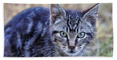 Beach Towel featuring the photograph Feral Kitten by Chriss Pagani