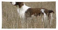 Field Bred Springer Spaniel Beach Sheet