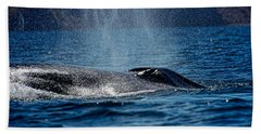 Beach Towel featuring the photograph Fin Whale Spouting by Don Schwartz