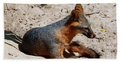 Foxie Beach Sheet by Debra Forand