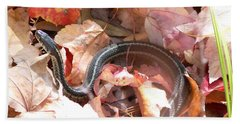 Garter Snake Beach Sheet