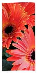 Gerbera Bliss Beach Sheet by Rory Sagner