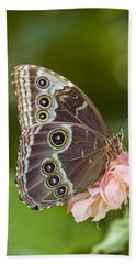 Giant Owl Butterfly Caligo Eurilochus Beach Towel