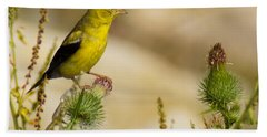 Goldfinch On Lookout Beach Towel by Bill Pevlor