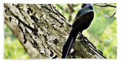 Grackle 1 Beach Towel