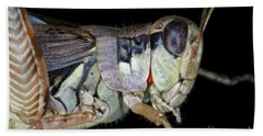 Grasshopper With Parasitic Mite Beach Towel by Ted Kinsman
