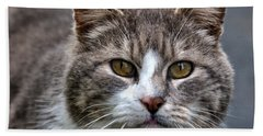 Gray Tabby Tux Cat Beach Towel