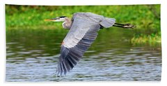 Great Blue Heron Inflight Beach Sheet