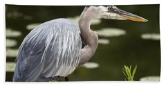 Beach Sheet featuring the photograph Great Blue Heron  by Jeannette Hunt