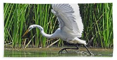Great Egret   Ardea Alba  Running Start Beach Towel