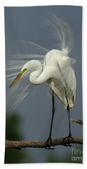 Great Egret Beach Towel by Bob Christopher