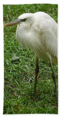 Great White Heron Beach Towel by Myrna Bradshaw