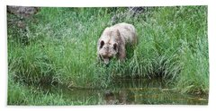 Grizzly Bear And Reflection On Prince Rupert Island Canada 2209 Beach Sheet