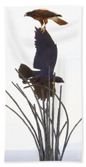 Beach Towel featuring the photograph Hawk On Statue by Rebecca Margraf