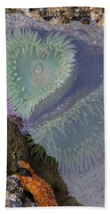Beach Towel featuring the photograph Heart Of The Tide Pool by Mick Anderson