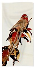 Beach Towel featuring the photograph House Finch Perch by Elizabeth Winter