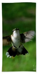Hovering Hummingbird  Beach Towel by Sue Stefanowicz