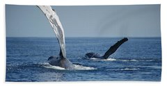 Humpback Whale Pectoral Slap Maui Beach Towel by Flip Nicklin