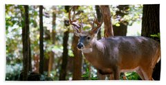 Beach Towel featuring the photograph Hunters Dream 10 Point Buck by Peggy Franz