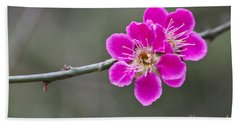 Beach Towel featuring the photograph Japanese Flowering Apricot. by Clare Bambers