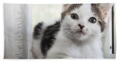 Kitten In The Window Beach Sheet by Jeannette Hunt