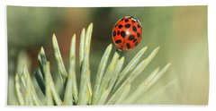 Beach Towel featuring the photograph Lady Beetle On A Needle by Penny Meyers