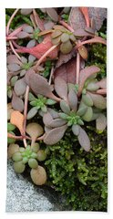 Beach Towel featuring the photograph Lime Stonecrop  Leaves In Winter by Daniel Reed