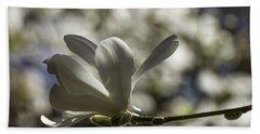 Magnolia X Loebneri  Merrill. Beach Towel