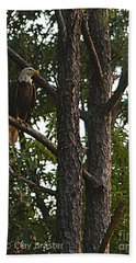 Majestic Bald Eagle Beach Sheet by Clayton Bruster