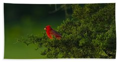 Male Cardinal In Pine Tree Beach Towel