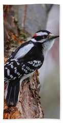 Male Downy Woodpecker Beach Towel